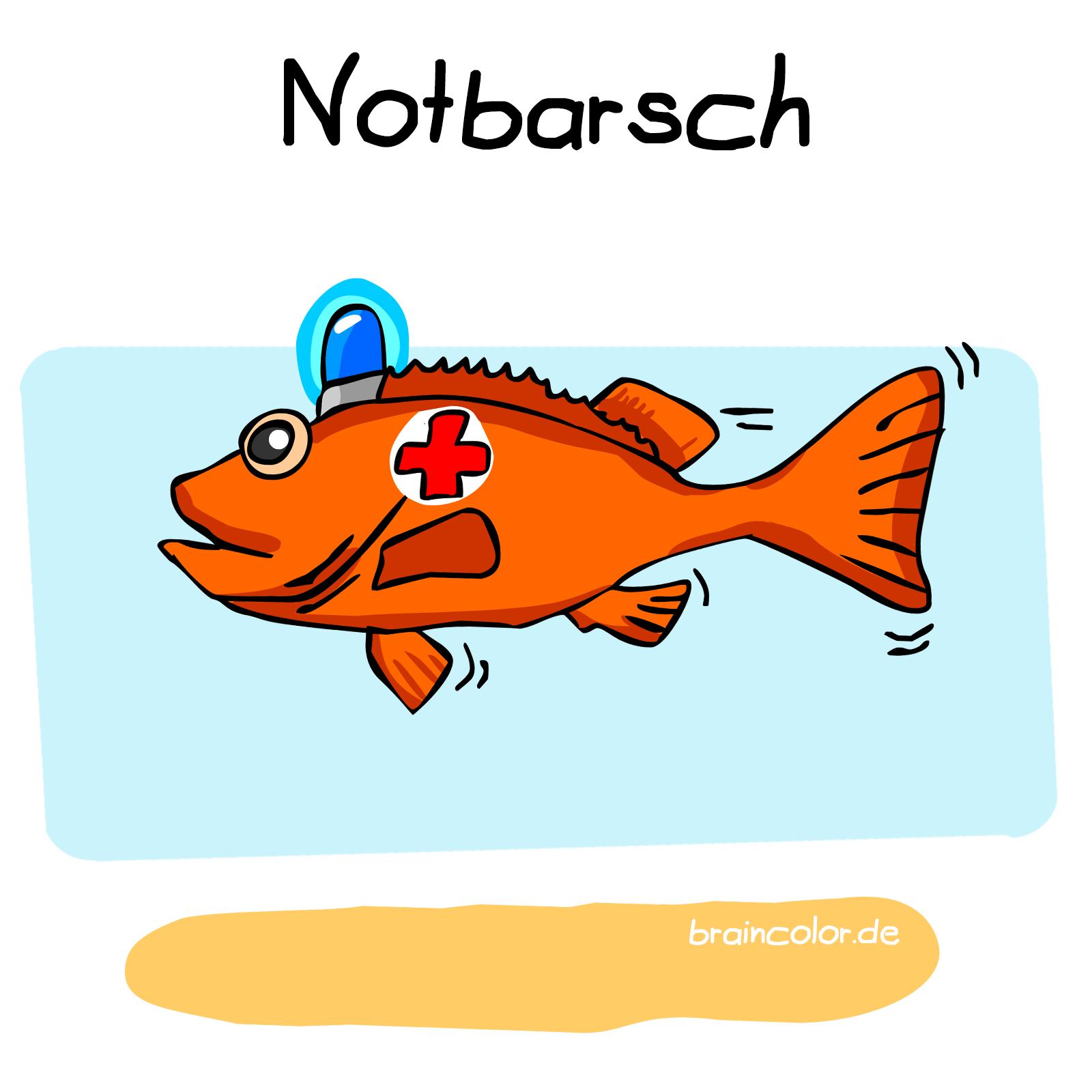 rotbarsch